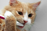 Cat and toothbrush - Fine Art prints