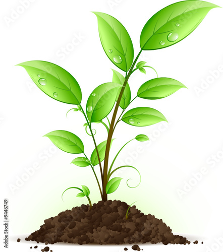 Jeune plante verte stock image and royalty free vector for Plantes vertes
