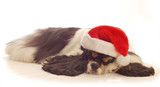 cocker spaniel sleeping wearing red santa hat poster