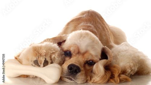 cocker spaniel with dog bone laying down t-shirt