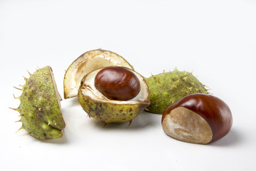 Two conkers one in its shell one set free