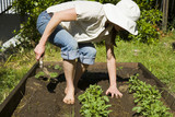 Young woman transplanting squash in her home garden. poster