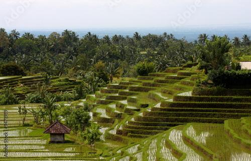 Foto op Plexiglas Indonesië Bali 0186
