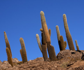 fine background of natural landscape, cactus and blue sky