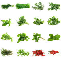 Collection of fresh herbs, isolated on white.