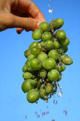 Grapes and drops