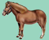 Illustration of a Pony of Iceland - Realistic style poster