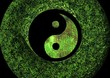 yin et yang biologique
