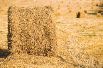 Yellow haystacks on field