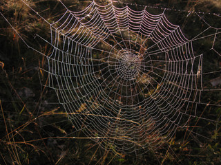 Morning mist on spider web close up photo