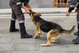 K-9 dog training on street show with police trainer poster