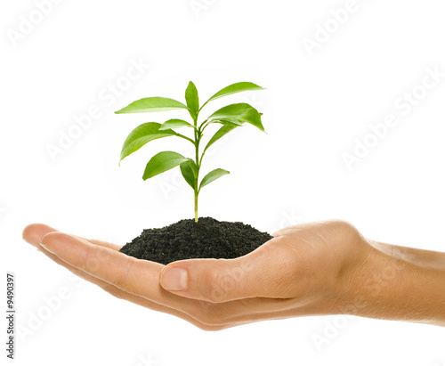 Young plant in female's hand - starting up concept