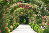 Fototapety Roses Arch in the Garden