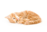 A yellow kitten lays down for a cat nap on a white background poster