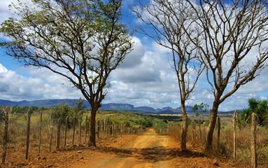 Road ground. Route de terre, brésil. Brazil.