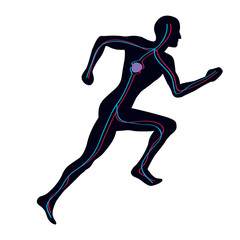 Man Running Showing Both Vascular Blood Systems