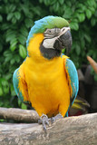 Talking Parrot Commonly Found in the Tropics poster