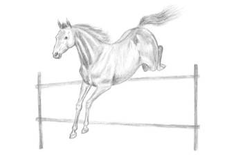 Jumping horse pencil drawing, hand-drawn.