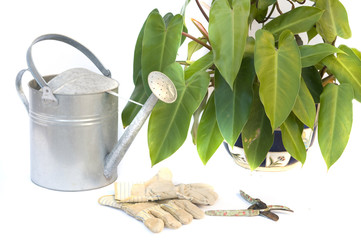 pruning shears and garden gloves with plant and watering.
