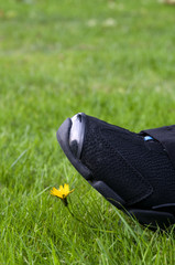 step on a flower