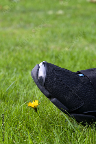 step on a flower