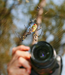 camera taking picture of Spider