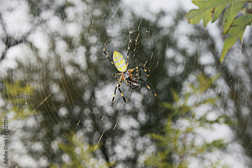 Large Spider On Web