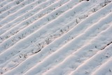 Agricultural field covered by snow poster