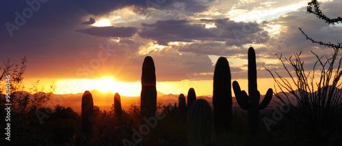 Leinwandbild Motiv Saguaro Plant in Tucson, Arizona