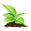 Jeune plante verte
