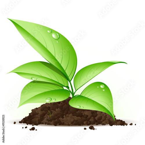 jeune plante verte by beboy royalty free vectors 9538923 on. Black Bedroom Furniture Sets. Home Design Ideas