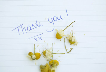 Small thank you note with chamomille flowers