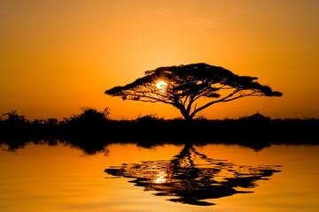 Acacia Tree at Sunrise in Kenya