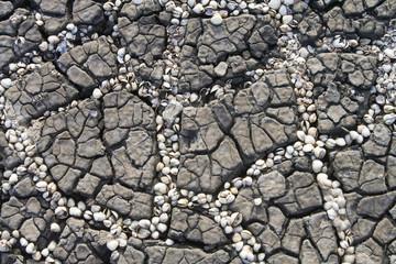 seashells in rift