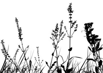 Grass Silhouette 01 - detailed illustration