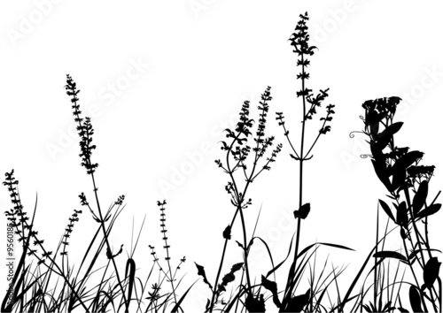 Grass Silhouette 01 - detailed illustration