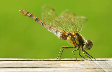 extreme close-up of a dragonfly on a fence