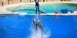 dauphin qui sautent avec une personne