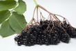 An isolated bunch of freshly picked elderberries