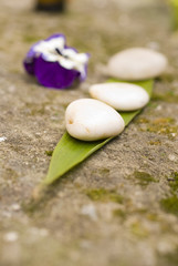 zen Aromatic flower and stones