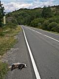 Road Kills poster
