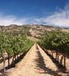 Napa vineyard