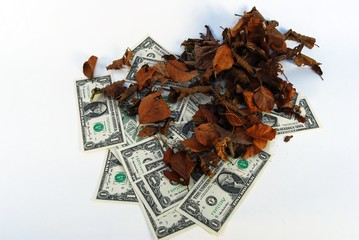 Autumn of investment