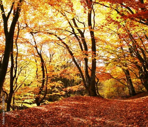 Panel Szklany Autumn scene