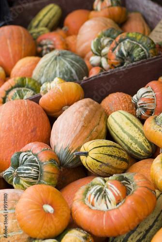 Squash, Pumpkin and other vegetables