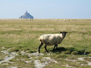 Moutons devant le mont saint michel