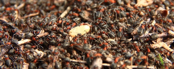 Working ants with egg in the forest