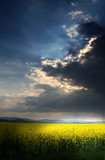 Storm above the rape field with sun behind the clouds poster