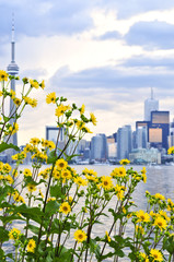 Toronto city waterfront skyline with yellow flowers