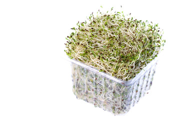 Isolated image of organic alfalfa sprouts.